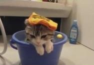 Trời nóng quá! Mèo đi tắm nào!